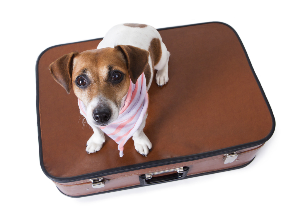 Pet boarding homes every time you need an off d for delhi for What is dog boarding
