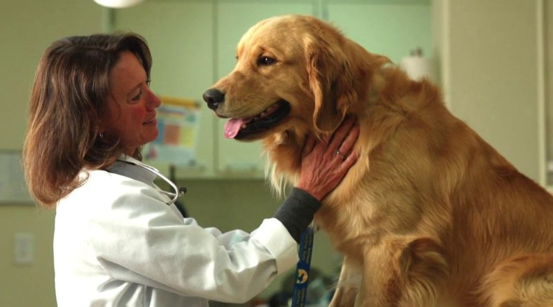 Pet Parents! These Are The Best Pet Clinics In Town!