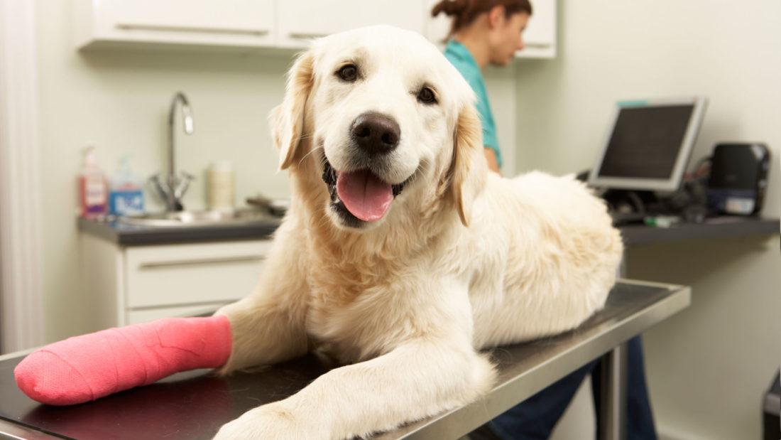 Image result for pet vet delhi